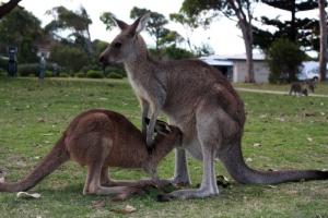 201303_australia